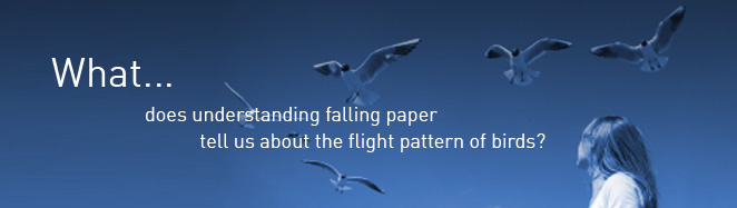 ...What does understanding falling paper tell us about the flight of birds?