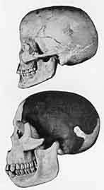 http://www.clarku.edu/~piltdown/pictures/Skulls/africanbushmanpiltdownskull.jpg
