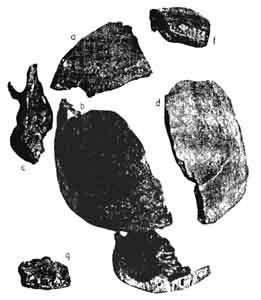 Piltdown Skull Fragments